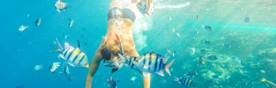 plongée poissons bouches du rhone