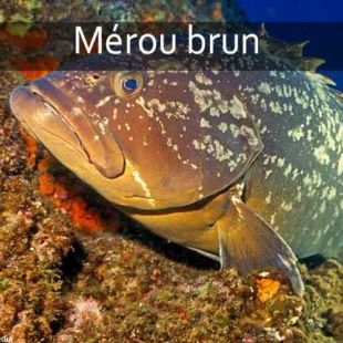 poisson mediterranee