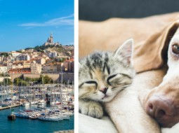 Marseille chats chiens spa